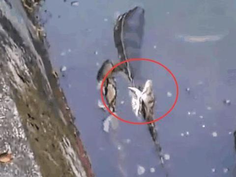 小伙野外钓鱼时听到怪异声响,定眼细看后,让他愣住了