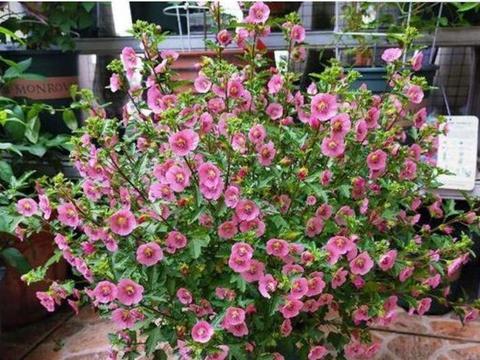 4种花寓意好,好养易活不招虫,阳台开花变温馨小花园