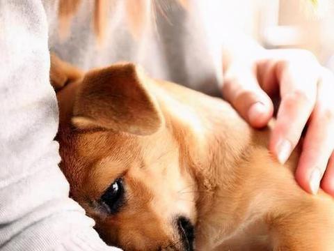 """狗狗有这几个表现,说明它有""""社交恐惧症""""!"""