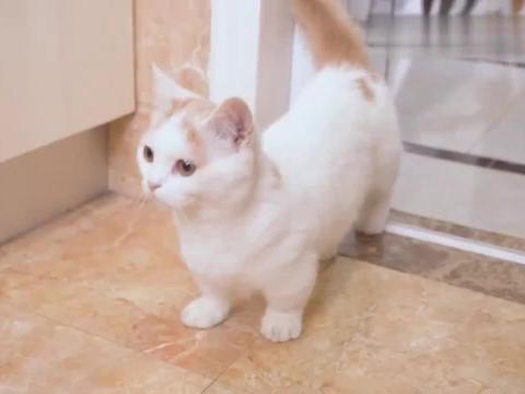 橘猫多年没洗澡,一进澡盆就开始说话,成精了?