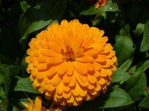 4种花,光照越好,开花越多,花朵迷人