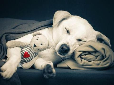 狗狗这几个睡姿,其实都表达不同的事情,你家是哪种?