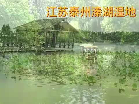 在江苏泰州溱湖湿地,听古稀船娘唱江北小调,陶醉了