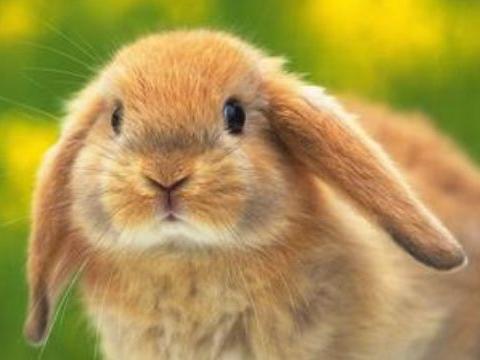 十兔九不全是真的吗?这几月出生的属兔人前途光明,一生富贵