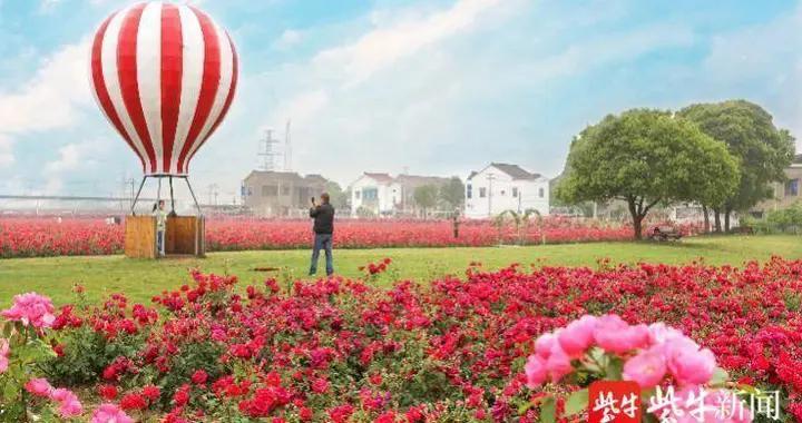 宜兴:服务企业促发展 玫瑰经济谋未来