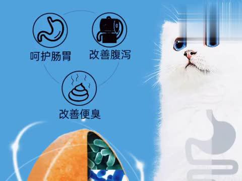 猫 猫咪 猫粮