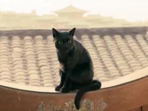 黑猫成精,用金子换瓜吃,事后男子膨胀立马被挖去眼睛