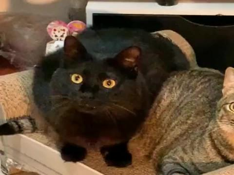 黑猫和狸花猫还挺有默契!