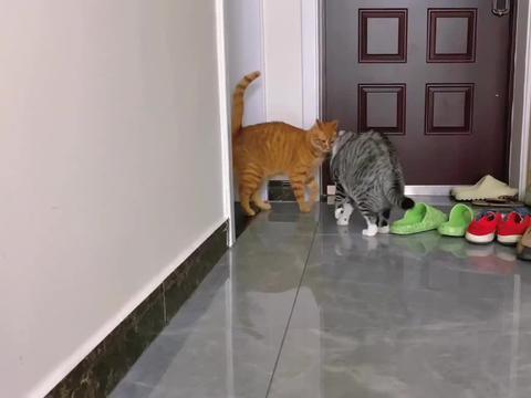 如何教育这逆子不能欺负其他猫咪,老母亲苦口婆心,是真没辙了!