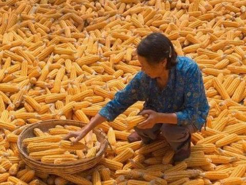 进口玉米拍卖又来了,粮价能否下跌?有答案了!6月17日玉米行情
