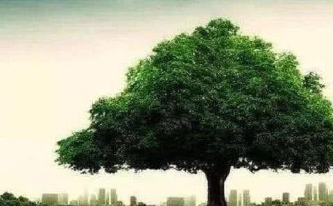 塔罗占卜:下面4棵大树,你觉得哪颗最繁茂?测你身边有几个贵人!