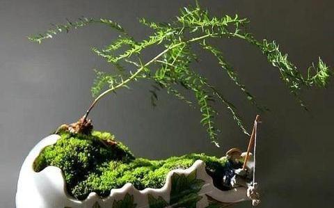 栽花种草,能够创造生活中的美,好的创意却能让生活中处处有惊喜