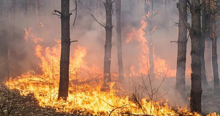 """为清理山场林地,永泰三人违规""""炼山""""导致森林火灾"""