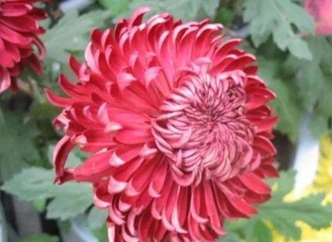 6月15日-6月23日,庭院选这几款花,养护简单,很值得栽培