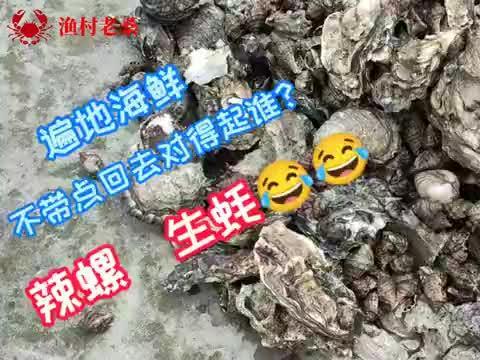 渔村人吃海鲜很容易,这里生蚝遍地辣螺成堆,老桑一会就装满一桶