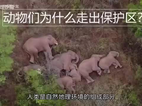 野生动物们为什么要走出保护区?