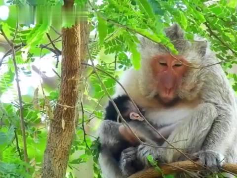 母猴子你看啥呢,我没带吃的来