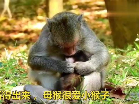 看得出来,母猴很爱小猴子