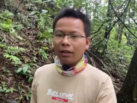 """小伙深山采蘑菇,意外发现一棵""""黄色羊肚菇"""",很多人不认识"""