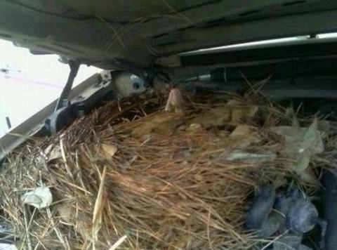 男子发现车子打不着了,打开引擎盖检查一看,把他吓了一跳!