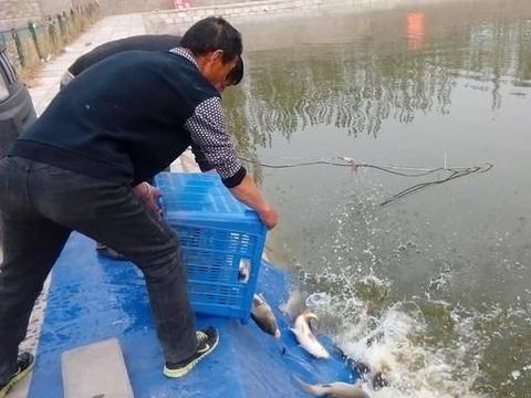 当黑坑新鲤鱼和回锅鲤鱼混放时,饵料的味型搭配方法和垂钓技巧