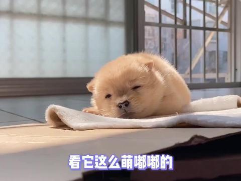 每一秒都想截图,偷懒睡觉的小奶狗,超萌超治愈~