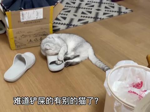 怀疑主人外面有猫,猫咪差点把鞋啃烂:铲屎官只能有我一个小宝贝