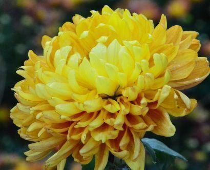 庭院选这几款花,栽培容易,值得入手