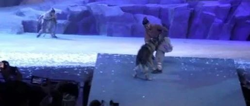 西安一剧院用真狼出演实景剧?官方调查来了