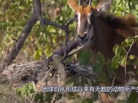 贵州境内出现消失20多年的动物,能像人直立行走,在中国很稀有