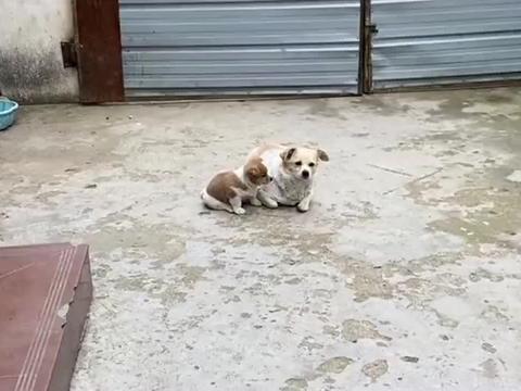 人嫌狗的画面上演,不待见的两岁半孩子,狗狗遇见你都躲着走