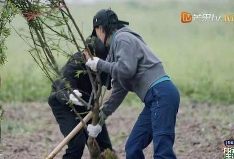 那英和梁静种了15棵树,李诞和陈赫40棵,为何口碑却两极化?