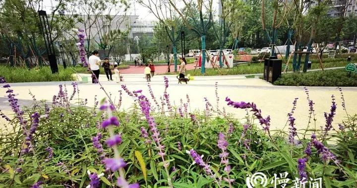九龙坡区今年将建3个面积超万平米的公园,快看看在你家门口不?