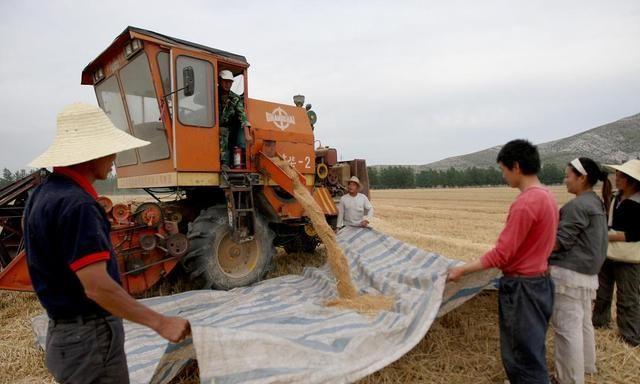 今年夏粮小麦价格非常稳定,现在是卖好还是等等看再卖?