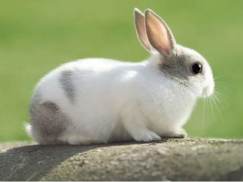 属兔人:7月18号不宜出门办事,你知道12月18号是什么日子吗