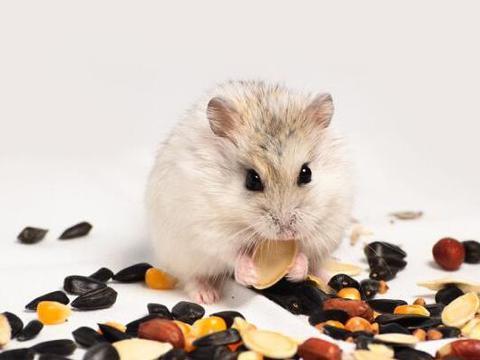 属鼠人2021年喜事,生肖鼠有3大喜来临,速度看看是什么喜