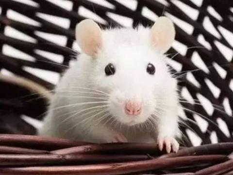 """十二生肖鼠人:只有下面这1个人,才是你后半生真正""""大贵人""""!"""