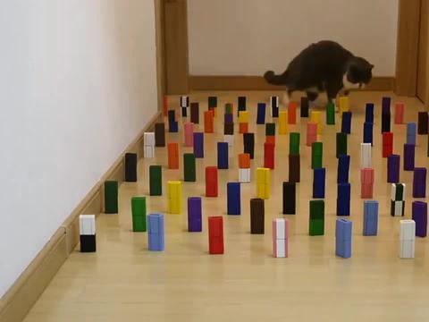 在地上铺满障碍物,猫咪几秒轻松通过