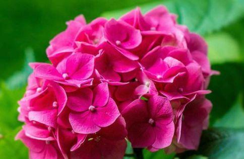 从6月23日开始,家养此款花卉,花开满枝头,花开芳香四溢