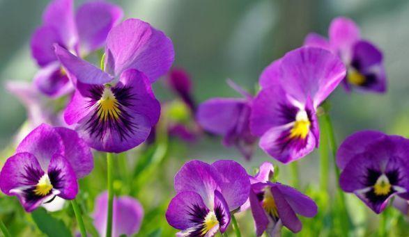 从6月23日开始,家养此款花卉,花开繁盛花香怡人,适合新手
