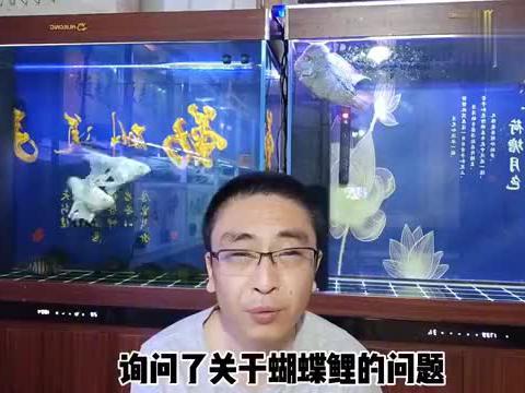 蝴蝶鲤摄食正常,但是吃完后在鱼缸内东倒西歪,正常吗?