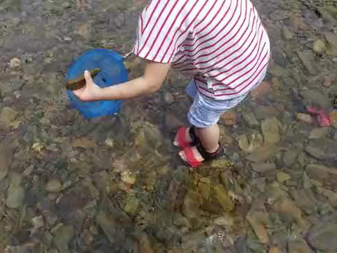 小姑娘去网鱼,鱼没有网到,石头却网了一大堆,玩得很开心!