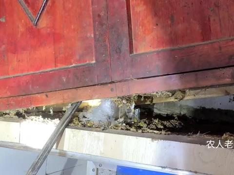 木柜下发现有叫声,大姐搬开木柜后到底看见了什么?吓得哇哇大叫