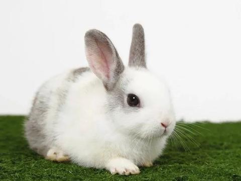 感情一片空白的属兔人,在牛年会喜迎姻缘,和良人携手谱写爱情