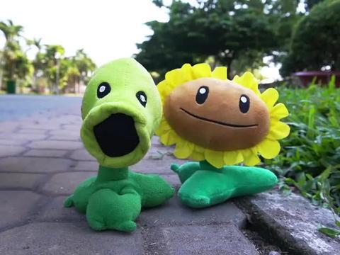 植物大战僵尸:豌豆找僵尸替向日葵报仇