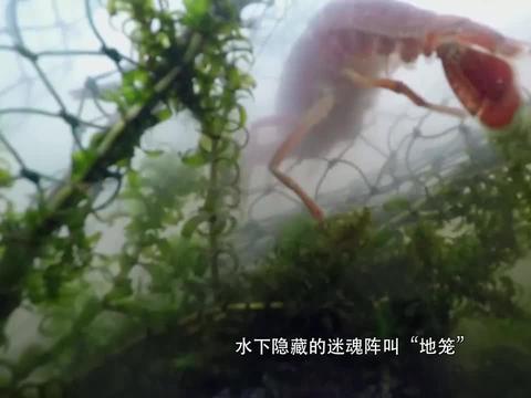 风味人间:为什么小龙虾,能在短短时间内,风靡全国?
