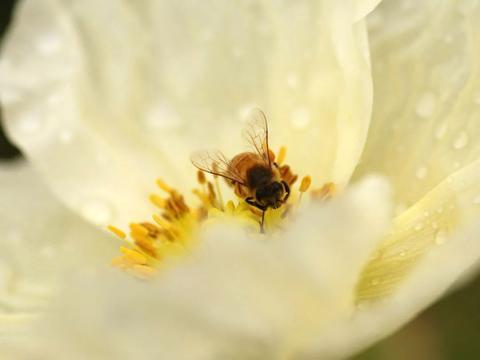 很甜的小短句发朋友圈,甜的我连蜂蜜都不想吃了!