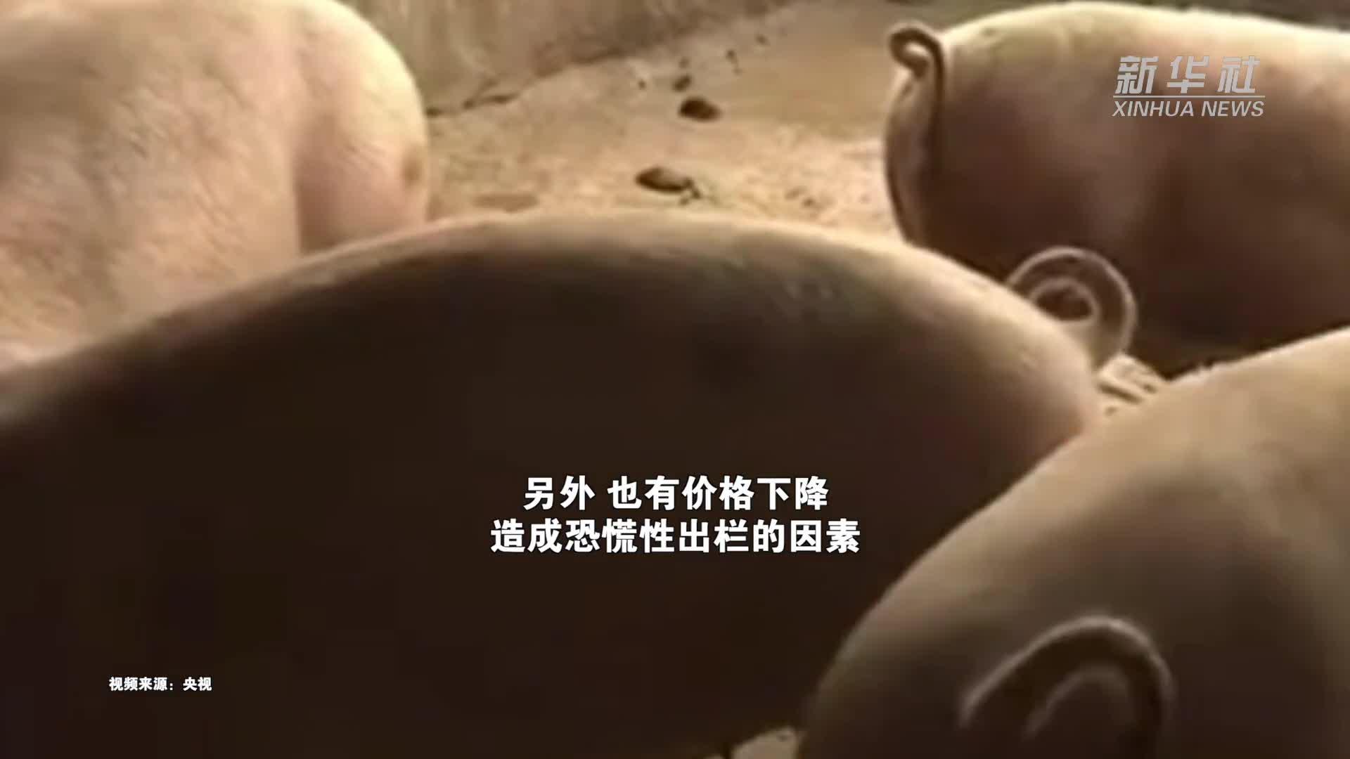 猪肉价格已腰斩 养殖户恐慌性出栏 农业农村部重要提醒