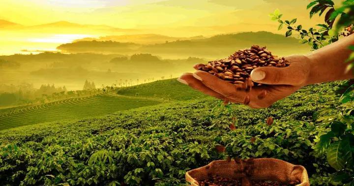 亚洲最大咖啡企业后谷咖啡的路在何方