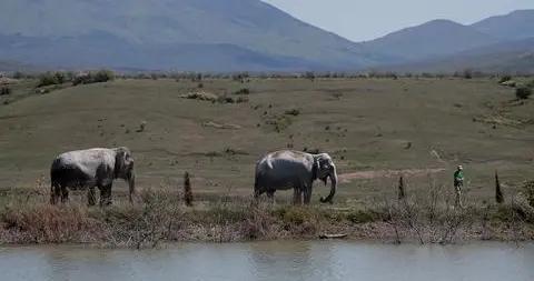 美媒:印度人象冲突加剧,每年约有500人因大象死亡